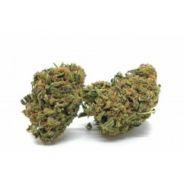 orange bud 10grammi